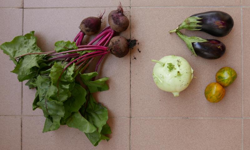 Red beet, kohlrabi, aubergine, zebra tomatoes