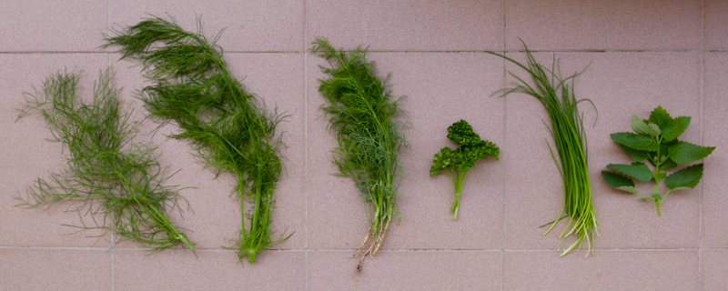 Ferns, curly parsley, chives, and nettle