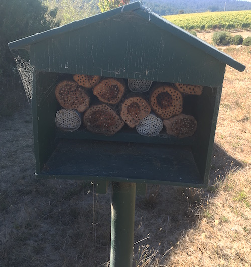 Bug houses at Littorai winery