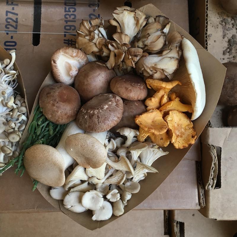 Fungi at San Francisco Farmers Market