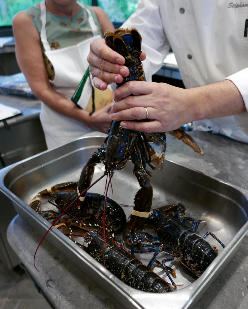 Britanny lobster