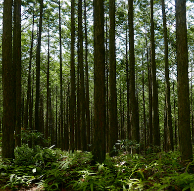 Kumano Kodo: finding the ethereal spirit in the Japanese forest