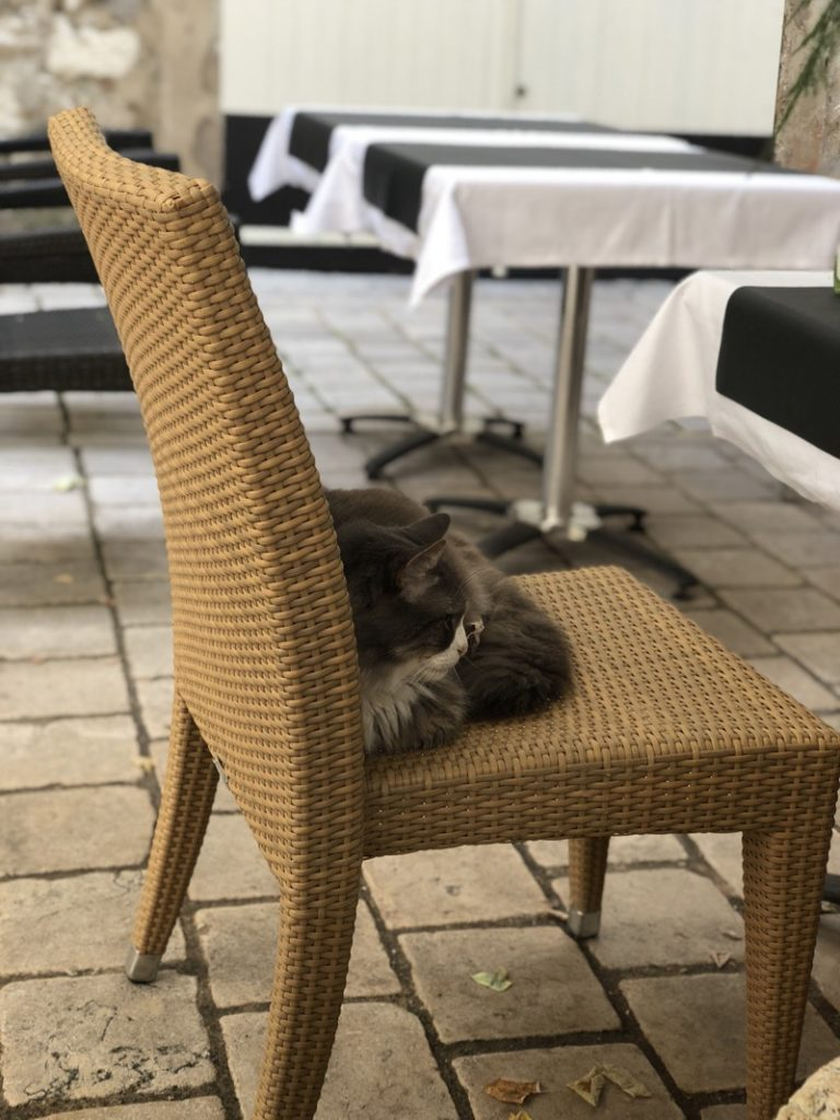slow life of a cat