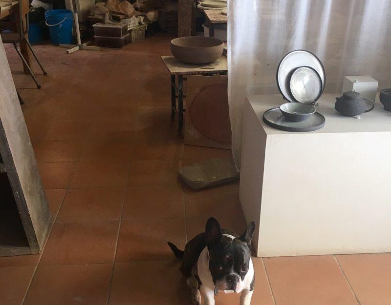 Arles dogs