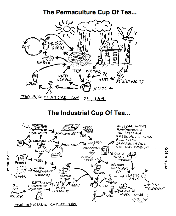 permaculture_cup_of_ttea_tall
