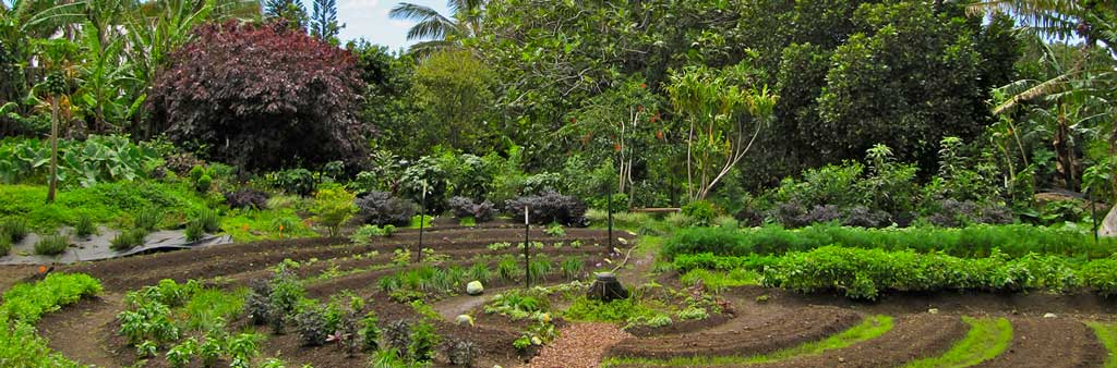 permaculture_garden_1024