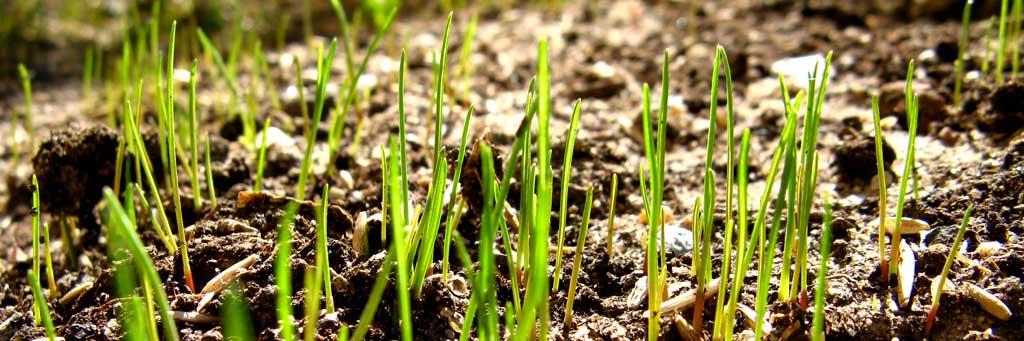 New-Grass_2_1024