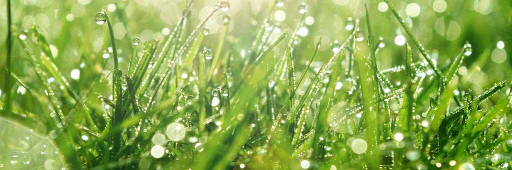 grass_1024