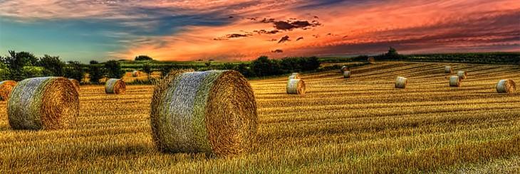 farmland-denmark