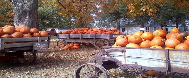 Howells-Pumpkins