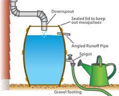 rainwater2
