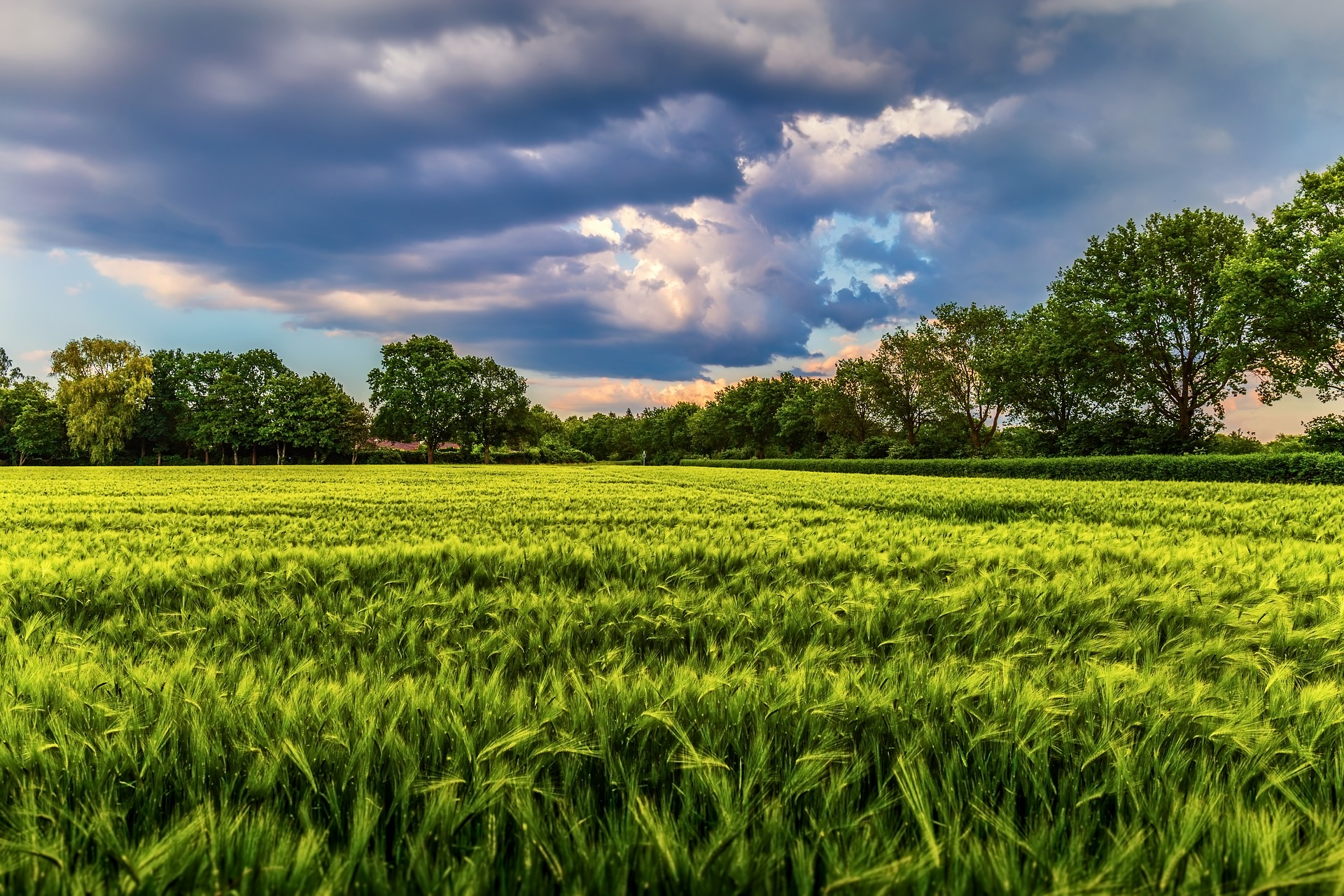 Grassy meadow with clouds