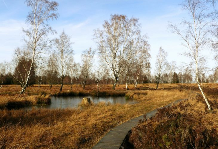 marshy wetland with trees and a wooden walkway