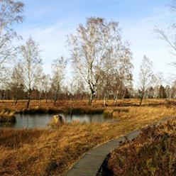 wetlands-730x5011