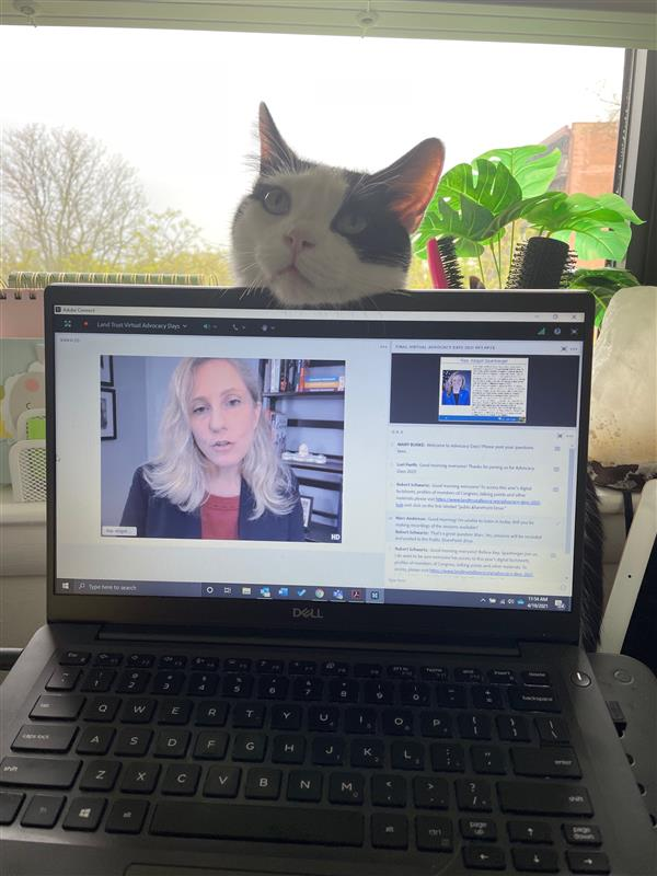 Cat with its head on top of a computer showing virtual Advocacy Days