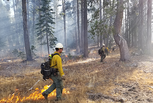 Prescribed burning at The Nature Conservancy's Independence Lake Preserve near Lake Tahoe in October 2018. / Edward Smith/The Nature Conservancy