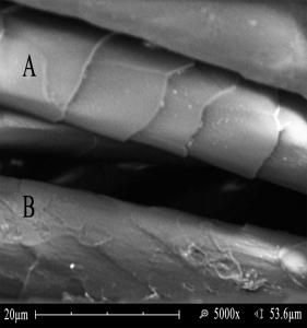 Figure 1. SEM Micrograph Laser Irradiated Wool