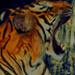 Website for Website Tigers