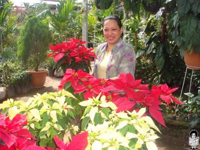 """Las mujeres son las más interesadas en adornar las diferentes áreas de sus casas con las """"estrellas de Navidad""""."""