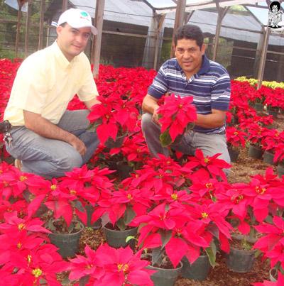 """La empresa """"Walmart"""" les da un fuerte apoyo a los floricultores hondureños para que aumenten la producción de flores de pascuas y mejoren sus ingresos."""