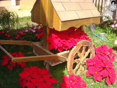 Los floricultores ya planean exportar las bellas flores de pascuas a El Salvador y Nicaragua.