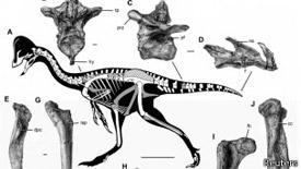 El nombre del este dinosaurio proviene de Anzu, un pájaro-demonio de la mitología mesopotámica.