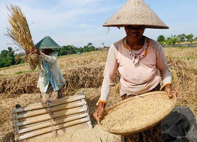 Los estándares del Codex sirven como base para la legislación nacional y establecen los marcos de seguridad en el comercio internacional de alimentos.