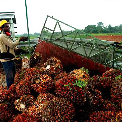 Unos 22 millones de dólares menos han entrado este año por exportación de aceite de palma, en comparación con el primer semestre del 2013.