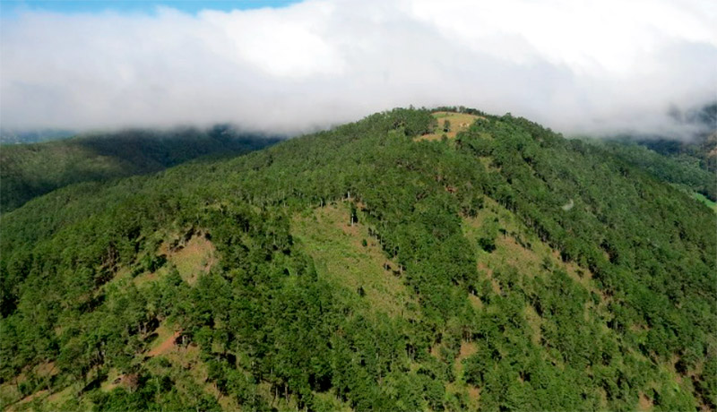 Unas 60 comunidades de 14 municipios están incluidas en este corredor boscoso, que sigue afrontando varias amenazas.