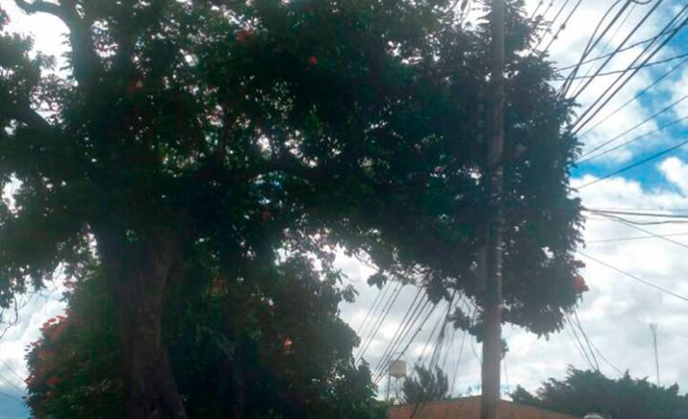 Falta de lámparas tiene sin 'luz' a los vecinos