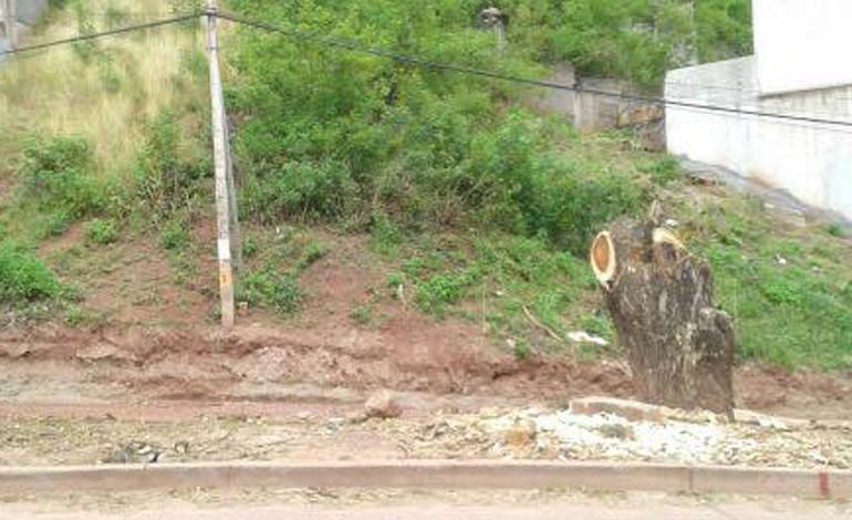 Denuncian descombro de árboles en bulevar