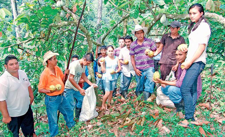 A producir más cacao