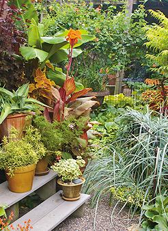 Photos Courtesy of Tangletown Gardens