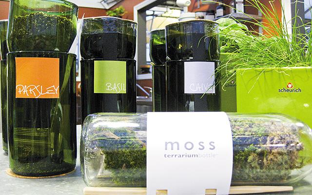 Micro-Greens