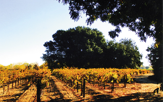 Lodi vineyards grow over 75 varietals of grapes. Photo by Carla Waldemar