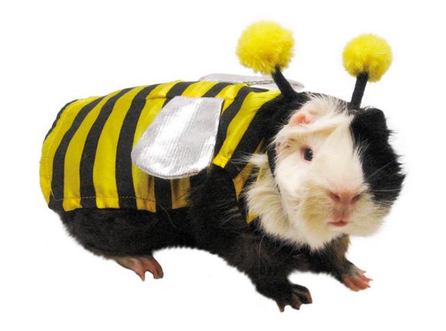 Pets Bumble Bee