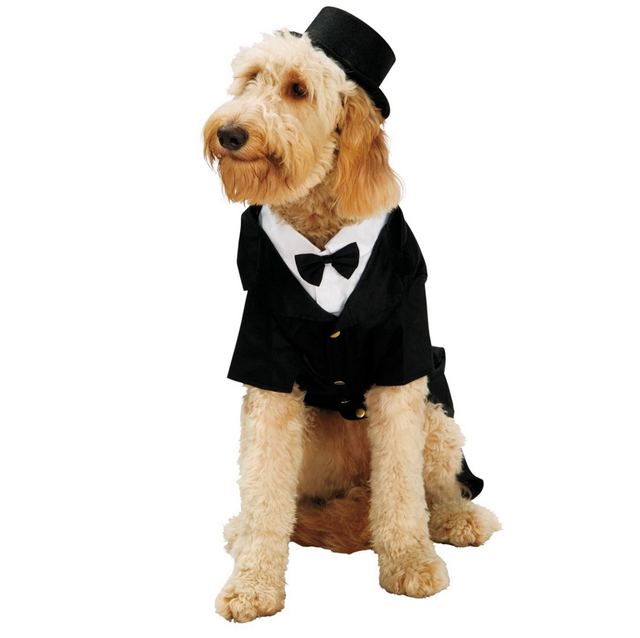 Pets Dapper Dog