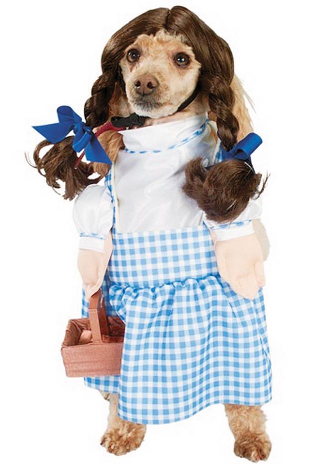 Pets Dorothy