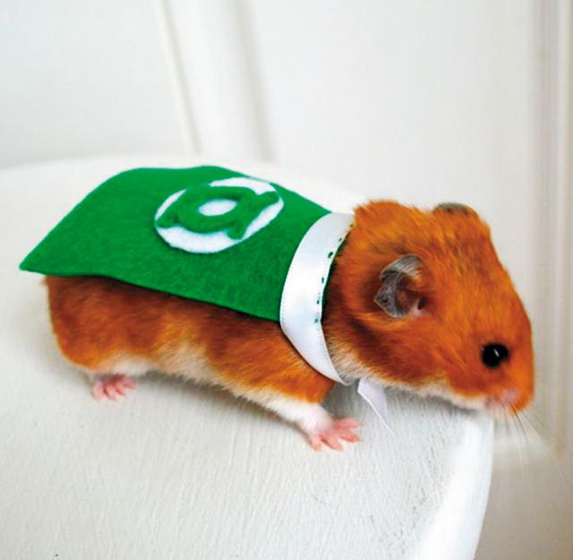 Pets Green Lantern