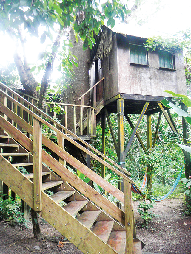 Treehouses at Parrot Nest Lodge allow guests to experience the jungle in a whole new way. Photo by Krissy Bradbury.