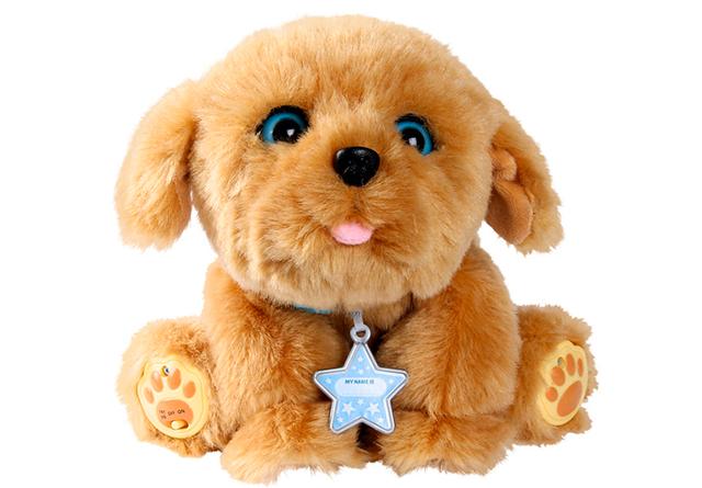 my-dream-puppy