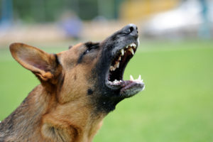 Dog bite attorney 2 300x200
