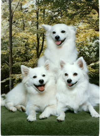 Three dogs
