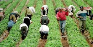 Migrant workers labor violations 300x151