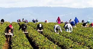 Farm labor unpaid wages