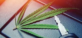 Marijuana 20picture