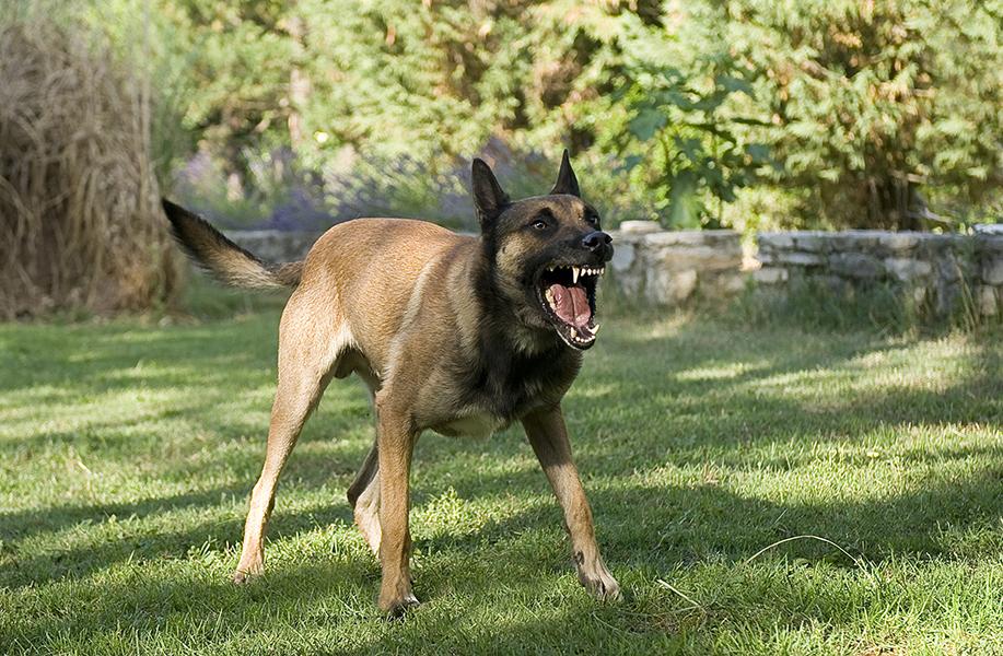 Ferocious Dog