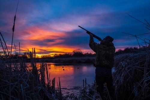 Hunting at Nightfall