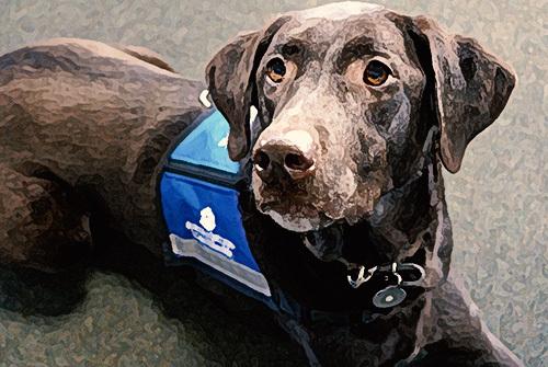 service dog sitting