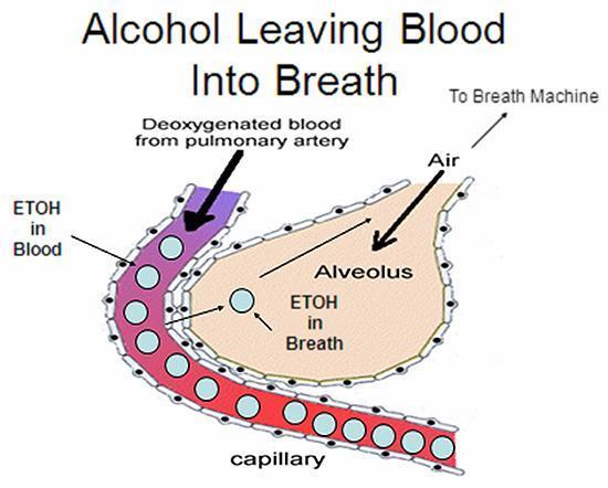 How GERD, Heartburn & Acid Reflux - 33.0KB